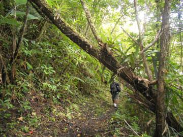 Cunha Cunha Pass Trail