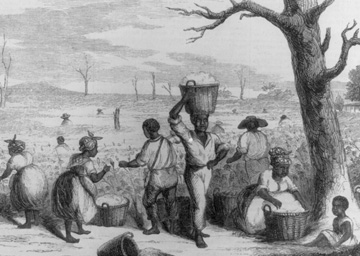 """Picking Cotton on a Georgia Plantation"""